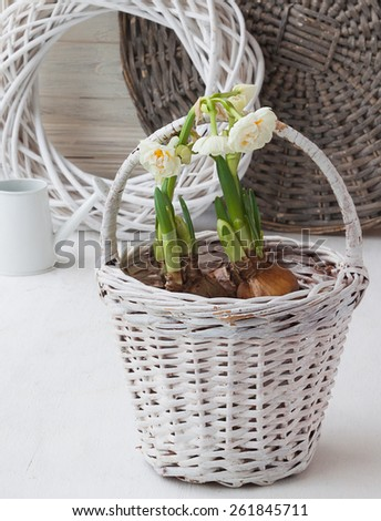 Daffodils in a white basket and a decorative watering can on background braided circle - stock photo