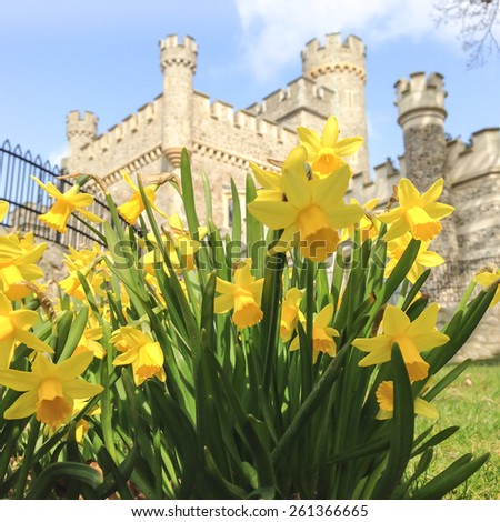 Daffodils in front of Whitstable caste of a spring day - stock photo