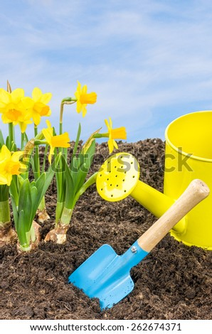 Daffodils with garden tools in front of a blue sky - stock photo