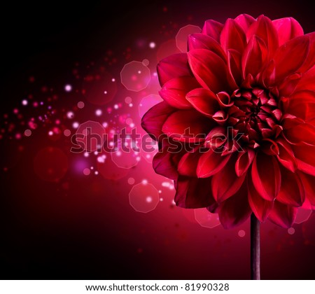 Dahlia Autumn flower design.Over black - stock photo