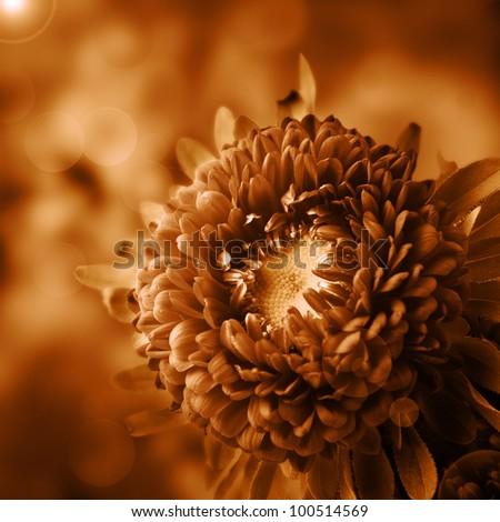 Dahlia flower design - stock photo