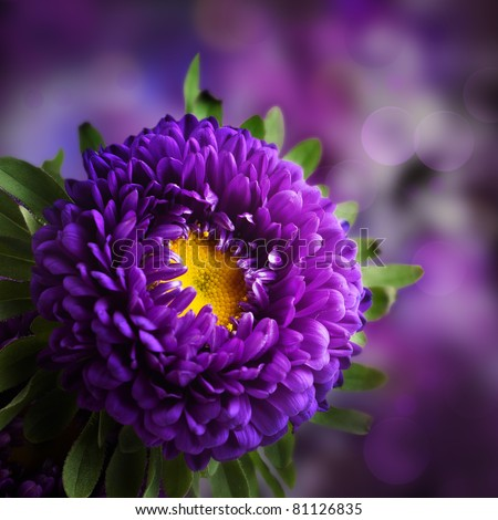 Dahlia flower design - stock photo