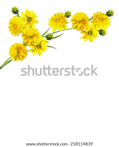 Dahlia flower isolated on white background - stock photo
