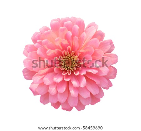 Dahlia isolated on white - path included - stock photo