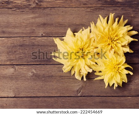 dahlia on wooden background