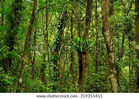 Daintree National Park, Queensland, Australia - stock photo