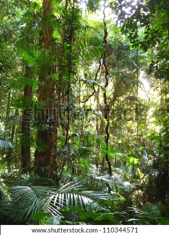 Daintree Rainforest, Queensland, Australia - stock photo