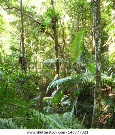 Daintree Rainforest, Queensland, Australia - stock photo