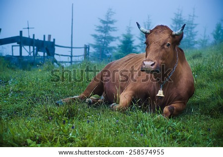 Dairy cow lying at green mountain meadow - stock photo