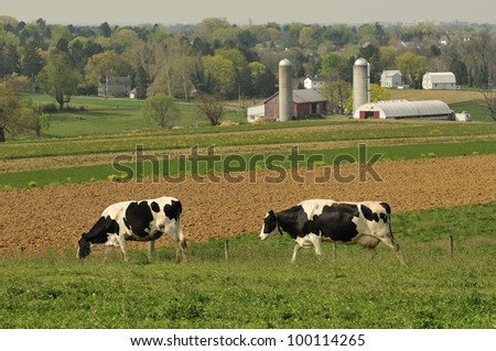 dairy cows in a Lancaster Pennsylvania farm - stock photo