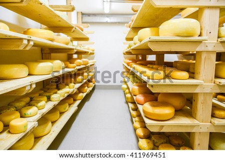 Dairy products (cheese, butter, cottage cheese, sour cream, yogurt) decorated, sliced, exhibited on wooden table in the kitchen. - stock photo