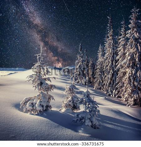 Dairy Star Trek in the winter woods. Carpathians, Ukraine, Europe - stock photo