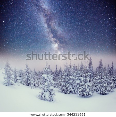 Dairy Star Trek in the winter woods. Carpathians, Ukraine, Europe - stock photo