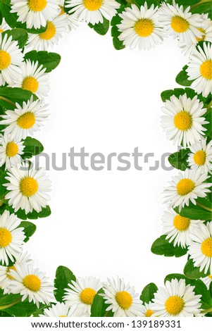 Daisies and green leaves frame on the white background