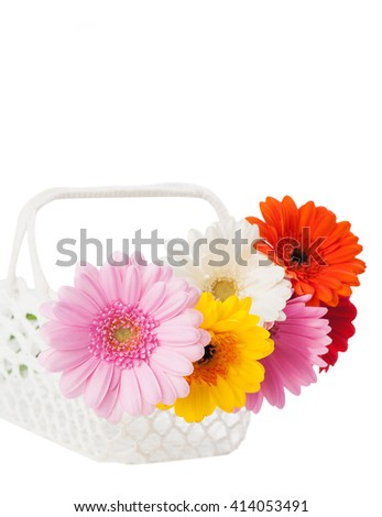 Daisies flowers in the white crocheted basket. Flower decor for the home. Isolated on white - stock photo