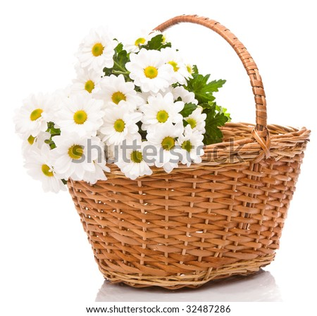 Daisies in basket, isolated - stock photo