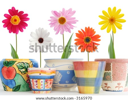 Daisies in fun ceramic pots - stock photo