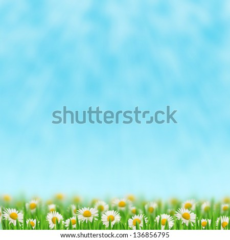 Daisies in the grass on the sky background - stock photo