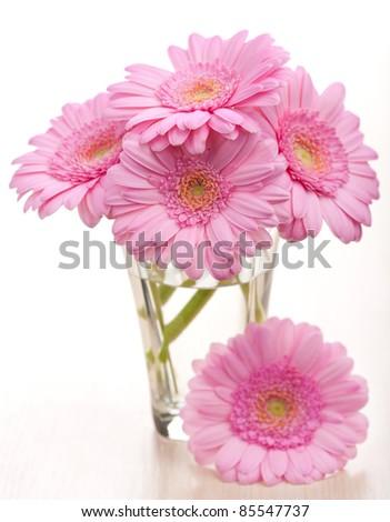 daisies in vase - stock photo