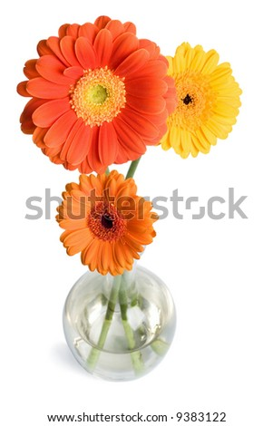 daisies in vase isolated - stock photo