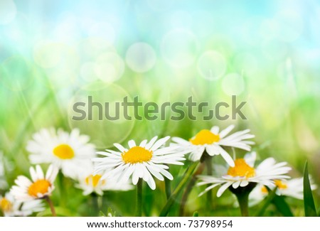 Daisies on spring background. - stock photo