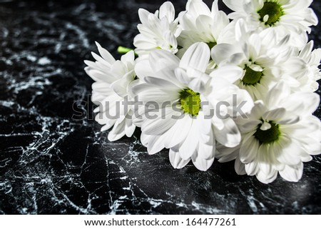 daisies on the original background
