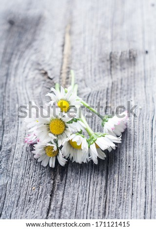 daisies on wooden table - stock photo