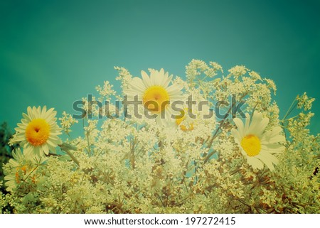 Daisies with retro filter effect. Bouquet of wildflowers. Vintage floral background. - stock photo