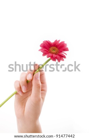 daisy and lady's hand