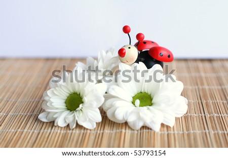 daisy and ladybug - stock photo