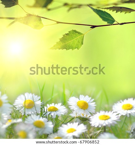 Daisy and the sun behind