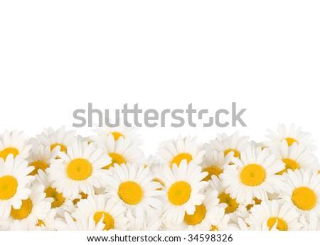 Daisy Border - stock photo
