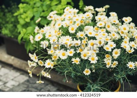 daisy bouquet - stock photo