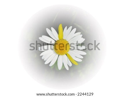 Daisy clock figuring five O clock with yellow hands - stock photo