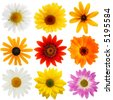 Daisy collection - stock photo