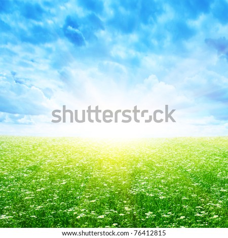 Daisy field and morning sunlight. - stock photo