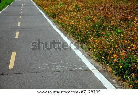daisy field and the road