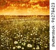 Daisy field at sunset in grunge and retro style. - stock photo