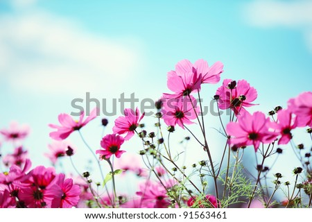 Daisy flower against blue sky - stock photo