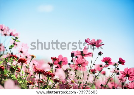 Daisy flower against blue sky. - stock photo