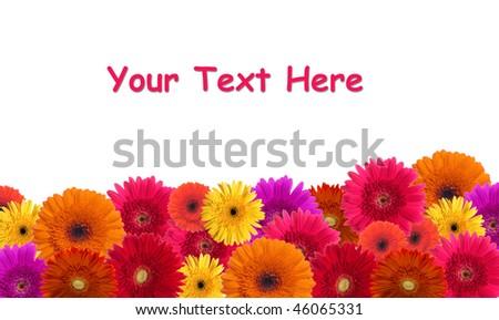 Daisy flower background - stock photo
