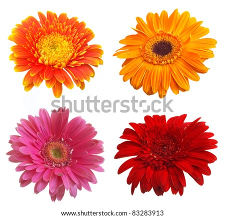 Daisy flower collection - stock photo