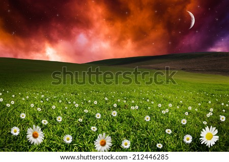 Daisy flower field in the night. Elements of this image furnished by NASA.