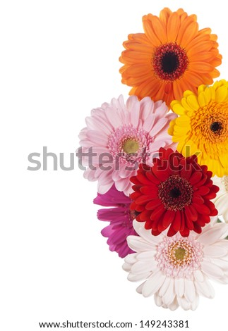 Daisy flower gerbera bouquet isolated on white background