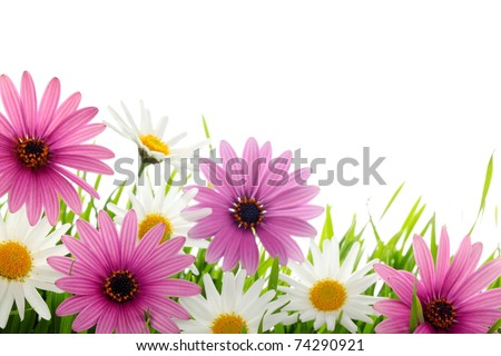 Daisy flower in green grass - stock photo