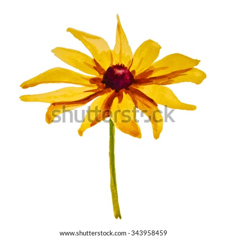 daisy flower on white background - stock photo