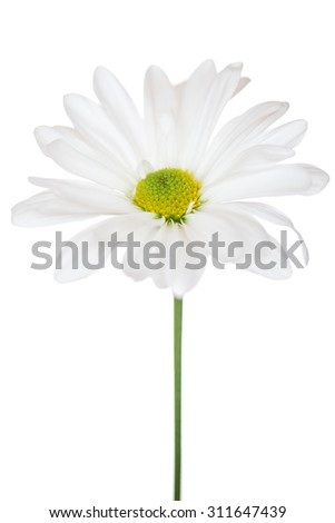 Daisy Flower White Yellow Daisies Blossom Floral Flowers Isolated - stock photo