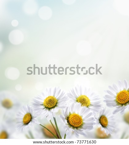 Daisy flower with beautiful spring bokeh - stock photo