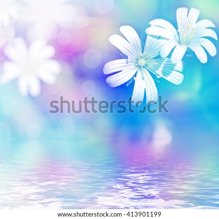 daisy flowers field. delicate beautiful wildflowers - stock photo