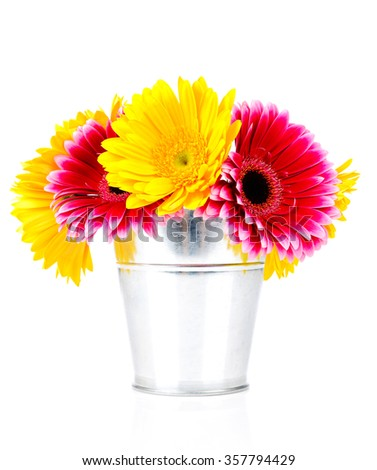 Daisy flowers in the bucket isolated on white